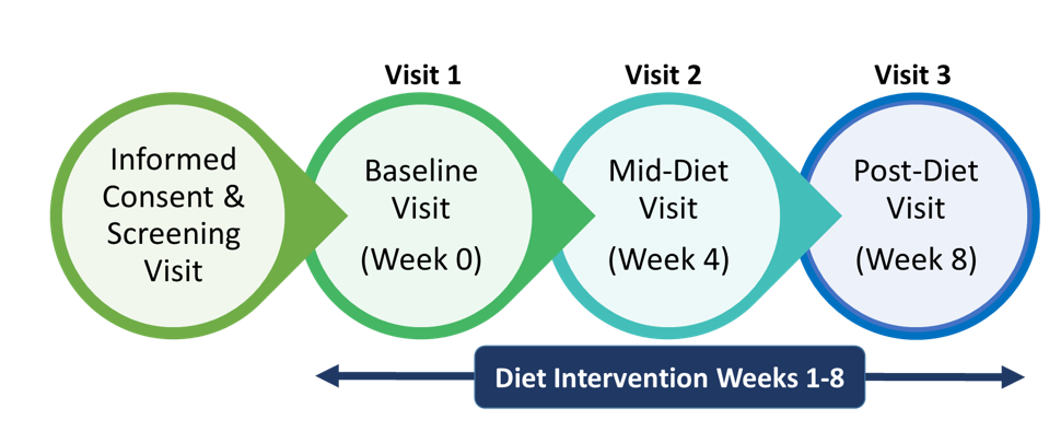 informed consent and screening visit to baseline visit (week 0) to mid-diet visit (week 4) to post-diet visit (week 8)